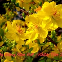 Chúc Mừng Năm Mới - Xuân Nhâm Thìn 2012